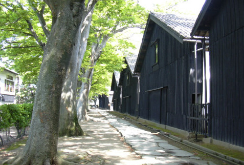 (1)欅並木.JPG