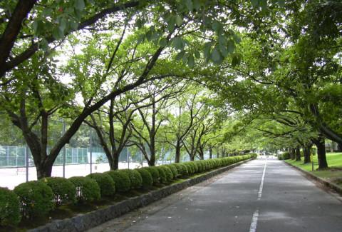 01粟津公園.JPG